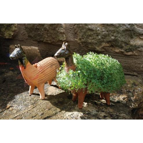 Mexico Grow Your Own - llama