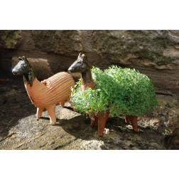Mexico Grow Your Own - llama